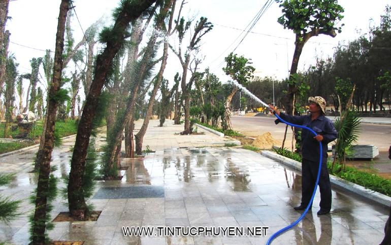 Công nhân đang chăm sóc cây xanh vừa được trồng trên tuyến đường đi bộ ven biển - Ảnh: THỦY TIÊN